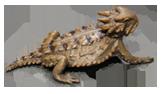 <h6>Amphibians & Reptiles</h6>